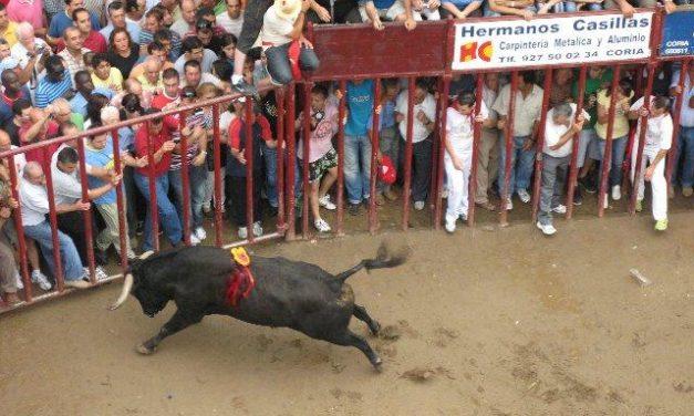Coria despide sin heridos por asta de toro el último festejo con reses bravas de las fiestas de San Juan