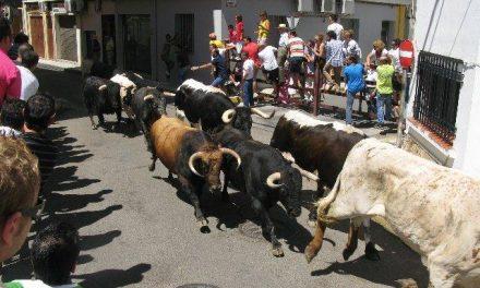 El primer encierro de San Buenventura con astados de Cebada Gago finaliza rápido y con una manada compacta