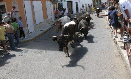 Los novillos de Victorino Martín se convierten en las reses más rápidas de los encierros de Moraleja