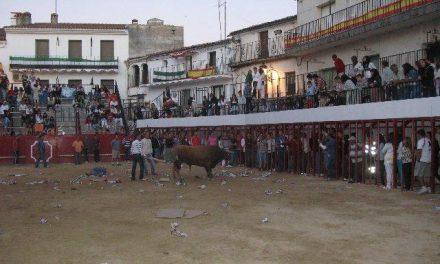 Los festejos taurinos de la madrugada del día 15 celebrados en Moraleja  finalizan sin registrar heridos
