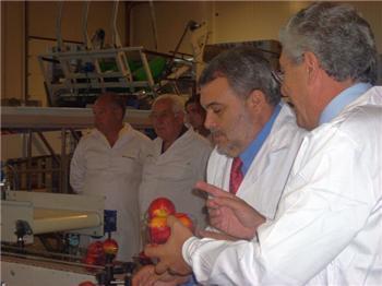 La campaña de frutas en Extremadura superará las 250.000 toneladas, un 15% más que en 2008
