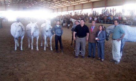 La ciudad cacereña de Trujillo buscará recursos para crear una escuela hípica municipal