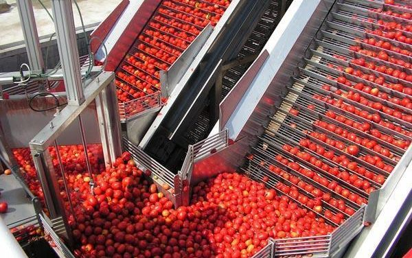 La Unión solicita a la Agencia de Control Alimentario que revise los contratos de compra-venta de tomate