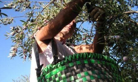 Los grupos de desarrollo muestran su preocupación por las líneas de ayudas a industrias agroalimentarias