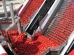 La Junta asegura que recuperará la apuesta por el I+d en el sector del tomate extremeño
