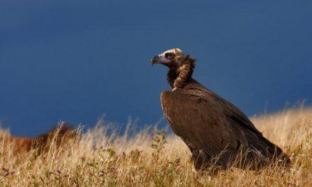Extremadura se convierte en la capital del Birding con más de 300 especies de aves