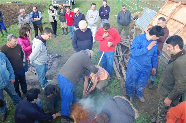 Ritual taurino en la Finca «La Ponderosa»