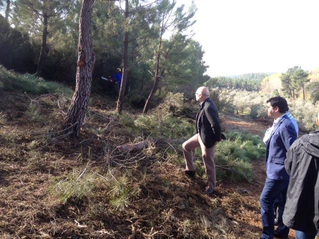 Echávarri destaca el potencial de la resinación de los pinares del norte de Cáceres