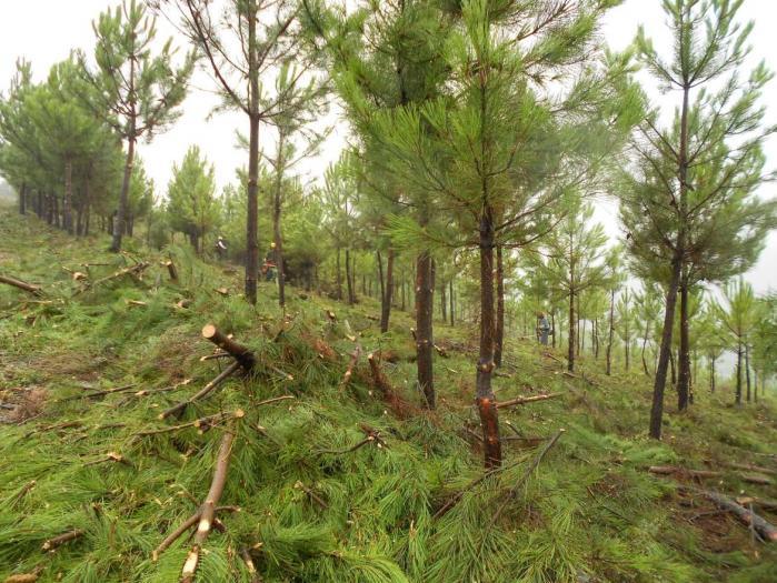 Fuentes destaca la importancia de la inversión forestal como fuente de empleo