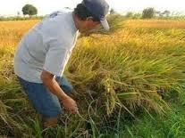 La Consejería de Agricultura subraya el papel de las organizaciones agrarias en la defensa de agricultores y ganaderos