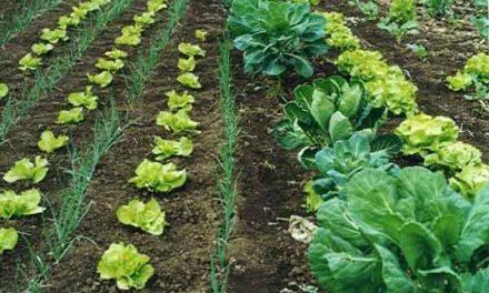 La Junta anuncia el trámite de audiencia de las solicitudes de ayudas a la agricultura