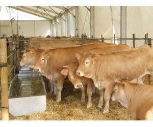 La Junta lidera un proyecto común para poner coto a la tuberculosis bovina
