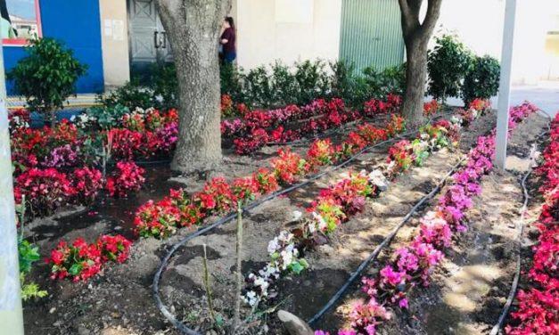 Flores de colores para cuidar el estado de ánimo de los vecinos, la nueva iniciativa del consistorio de Moraleja