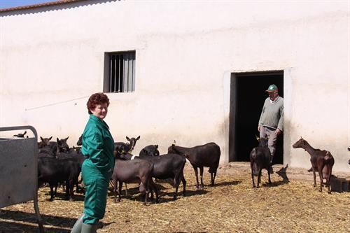 La Junta abre el plazo para solicitar ayudas al almacenamiento privado de carne