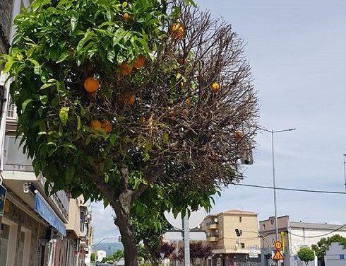 El Ayuntamiento de Moraleja detecta vertidos de sal en los alcorques de árboles para secarlos