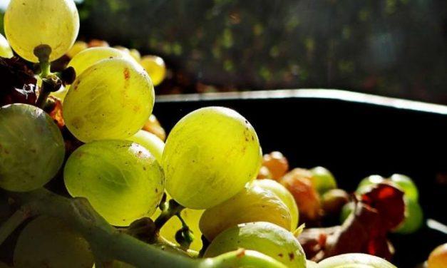 La Unión  afirma que la Junta debe más de 17 millones de euros a los viticultores de la región en fondos de apoyo
