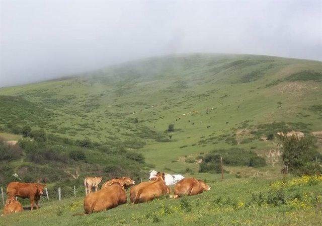 Cáceres Viva solicita la puesta en marcha de industrias agroalimentarias en el Valle del Alagón