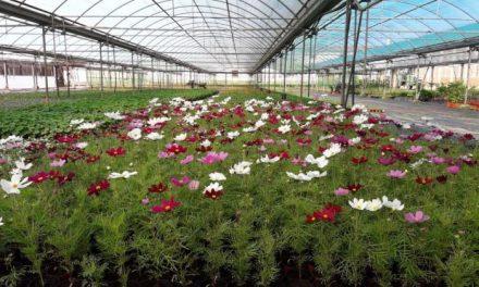 La Diputación de Cáceres ofrece plantas ornamentales gratuitas a los pueblos de la provincia hasta el 14 de mayo