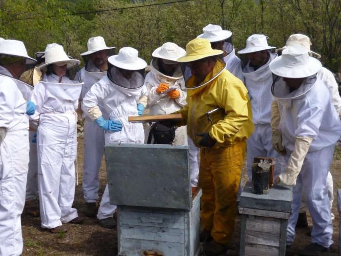 """UPA-UCE  advierte de que el nuevo etiquetado de la miel deja a los productores """"en manos"""" de las industrias"""