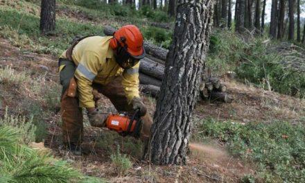 La época de peligro alto de incendios forestales arrancará en Extremadura el próximo lunes