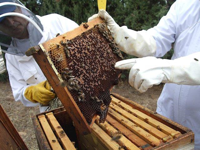 Extremadura destina casi 2,4 millones de euros en ayudas a la venta y comercialización  de productos apícolas