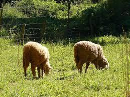 Agricultura amplía la vigencia de pastoreo controlado como medida de prevención de incendios