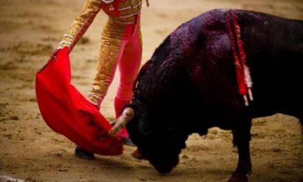 Cinco organizaciones animalistas piden a Vara que reflexione sobre las ayudas a la tauromaquia