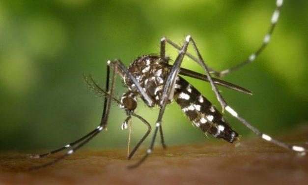 Los expertos aseguran que no hay riesgo de contagio del coronavirus a través de la picadura de mosquitos