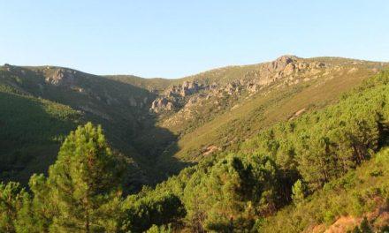 La Junta y la firma de electrónica LG reforestarán cincuenta  hectáreas en la Sierra de Dios Padre