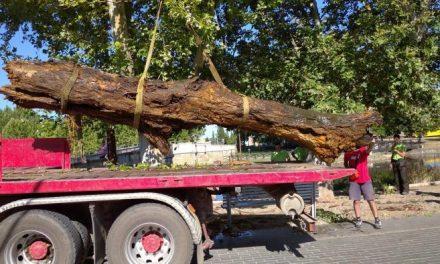 Moraleja elimina troncos y algas en el río Rivera de Gata para disminuir el riesgo de inundaciones
