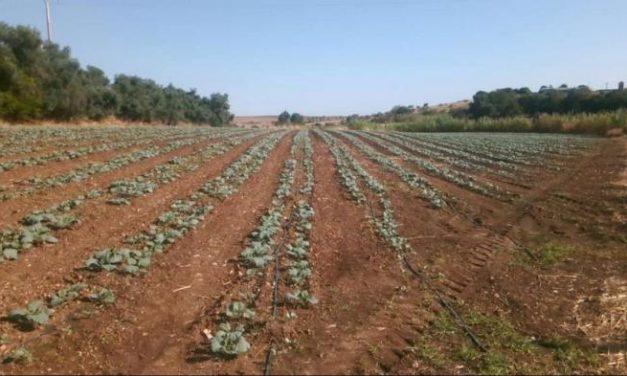 La Junta de Extremadura abona 59,9 millones de euros en ayudas agrícolas para más de 22.500 perceptores