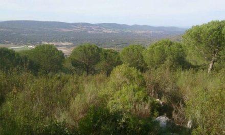 Extremadura quiere protegerse de los incendios mediante el pastoreo tradicional