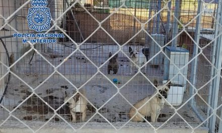 "Policía Nacional desmantela en Don Benito un criadero ilegal de perros en ""pésimas condiciones"""