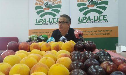 UPA-UCE denuncia la venta de ciruelas de pequeño calibre en supermercados por los que el agricultor no percibe nada