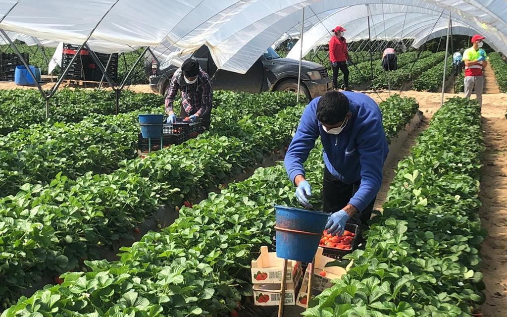 El impacto de la Covid-19 en la economía reduce el número de ocupados en 15.000 personas en Extremadura