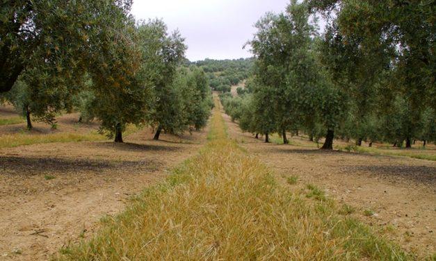 La Junta aboga por fortalecer la innovación en el sector agrario para fijar población en los territorios