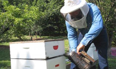Coria ofrece una experiencia apícola en El Borbollón para conocer el mundo de la miel