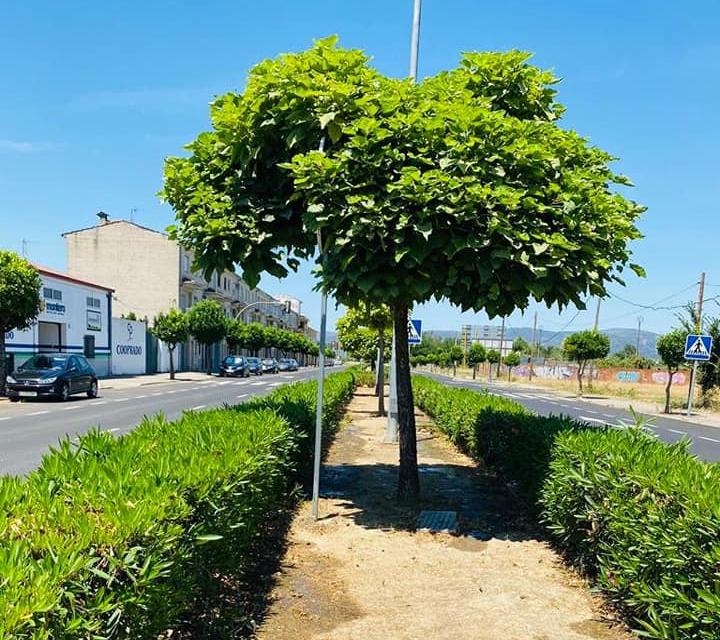El Ayuntamiento de Moraleja desmiente el abandono de las zonas verdes municipales