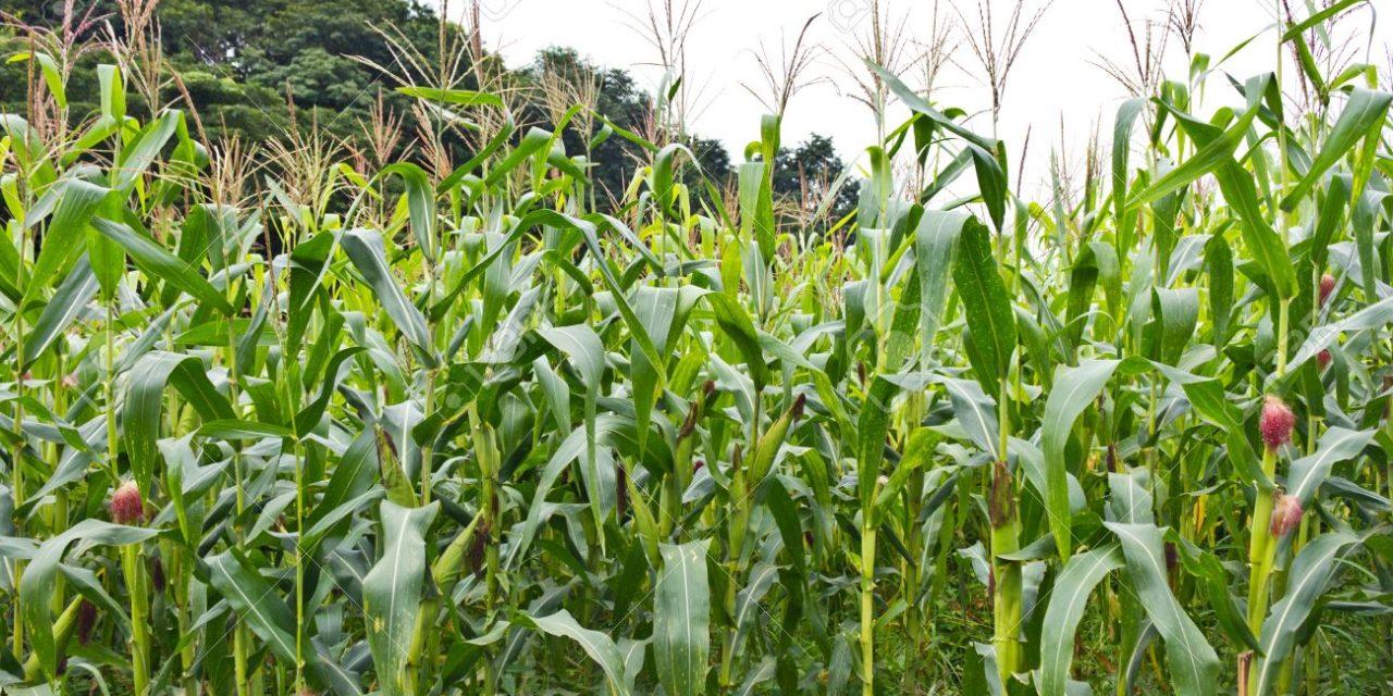 Cinco millones de euros en ayudas para modernizar explotaciones agrarias
