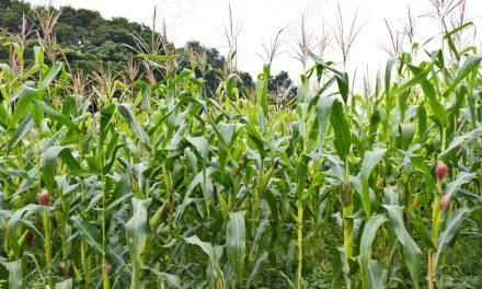 Extremadura inyectará 18 millones de euros en el sector agroganadero para paliar los efectos de la crisis
