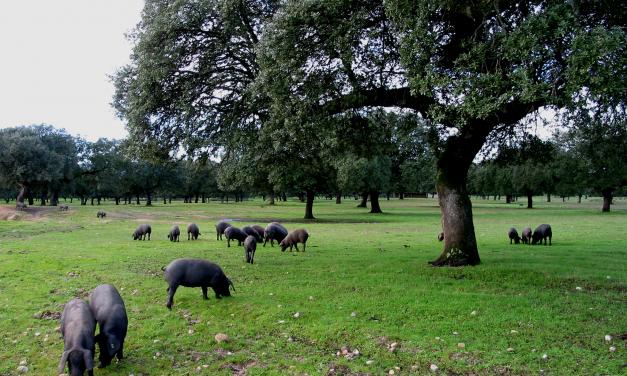 UPA-UCE alerta del aumento de la peste porcina y pide que se extremen las precauciones