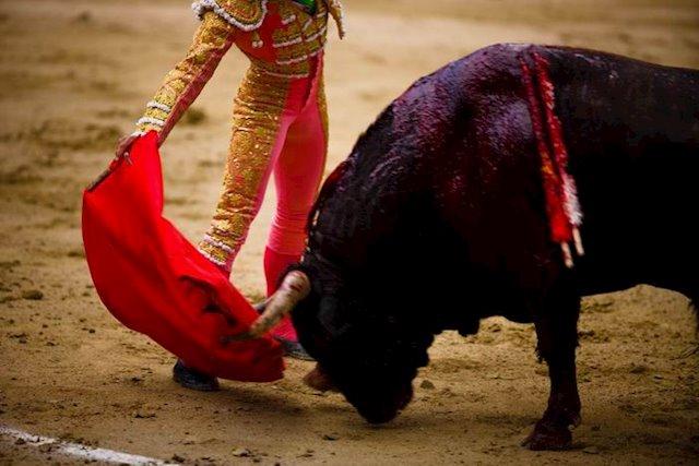 El mundo del toro celebra poder realizar festejos al 50%