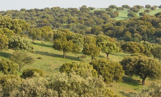 Extremadura tiene 600 millones de árboles y una media cinco veces superior a la del resto de España