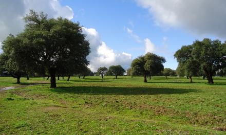 Extremadura destina más de dos millones de euros para incrementar la productividad de fincas rústicas municipales