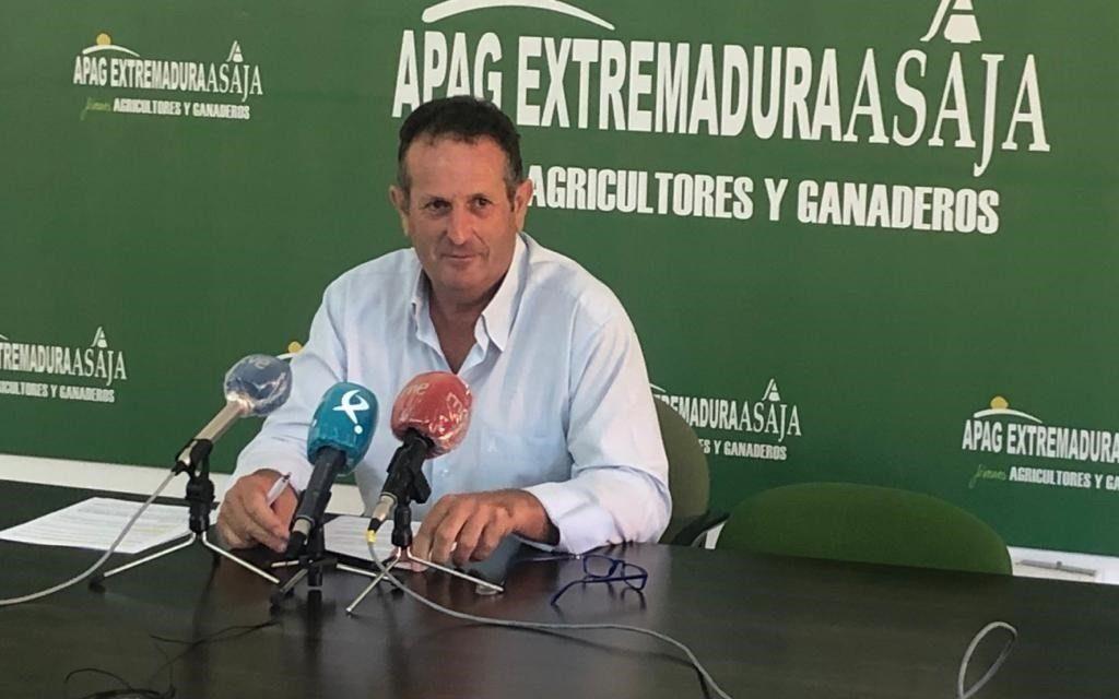 """APAG Extremadura Asaja califica la próxima cosecha de aceitunas como """"la peor del actual siglo"""""""