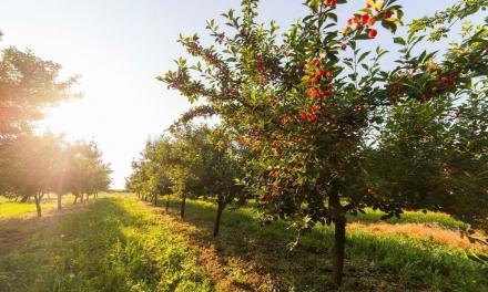 Agricultura publica las bases que regulan las ayudas a la reconversión de plantaciones de frutales