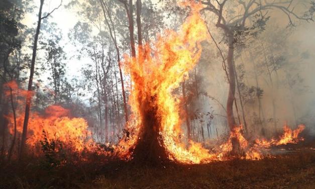 Vecinos de Sierra de Gata piden a los ayuntamientos una mejora de la gestión forestal para evitar incendios