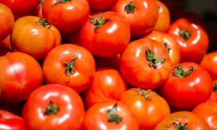 APAG Asaja alerta de que la industria intenta cerrar contratos de tomate por debajo de su precio