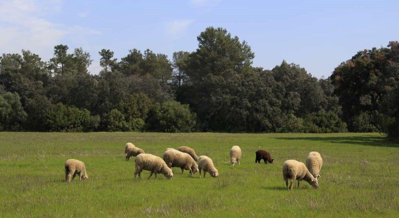 UPA-UCE presenta a la Junta más de 80 propuestas en materia agrícola para la reactivación económica