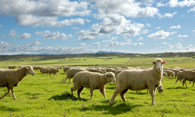 Agricultura publica las resoluciones de ayudas asociadas a explotaciones de ovino, caprino y vacuno